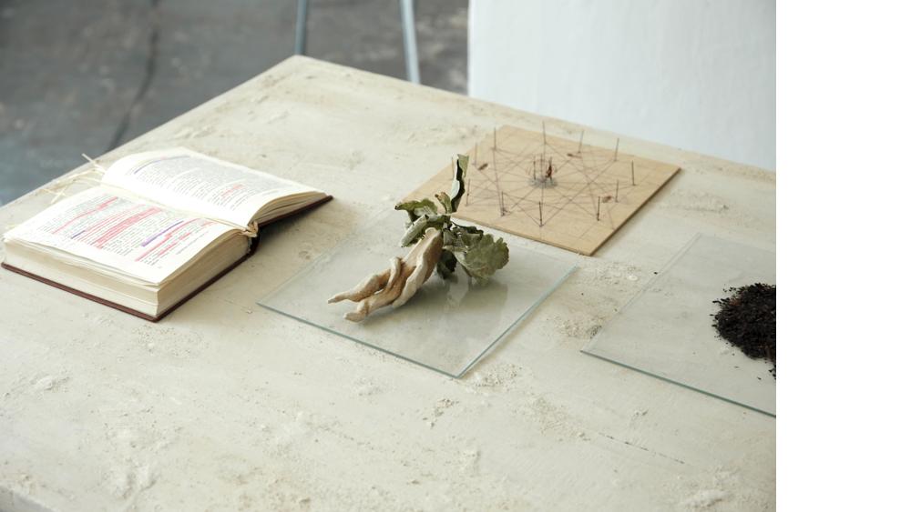 """5 Andara Shastika, """"identifica mandragora"""", Installation, 2014"""