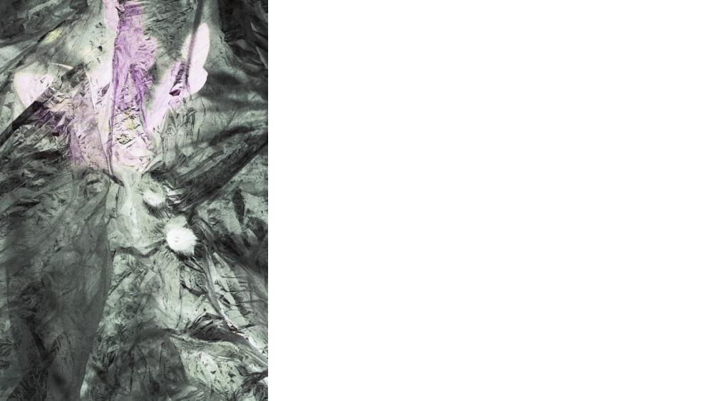 "6 Andara Shastika, ""identifica mandragora- Ectoma"", Foto, 2014"