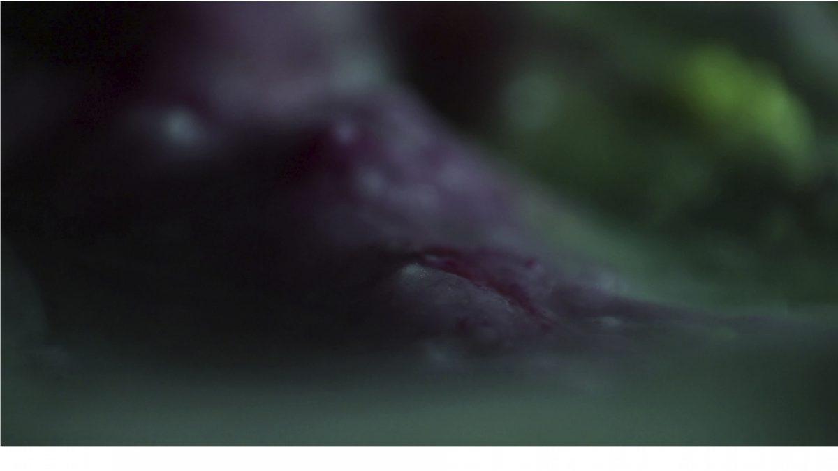 14 Paula Mierzowsky, Lemonorbit, Video, 2013