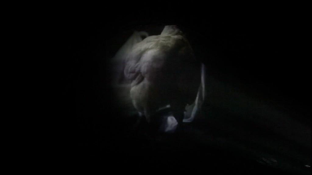 Paula Mierzowsky, Animagic Intruder, Videostill, 2012