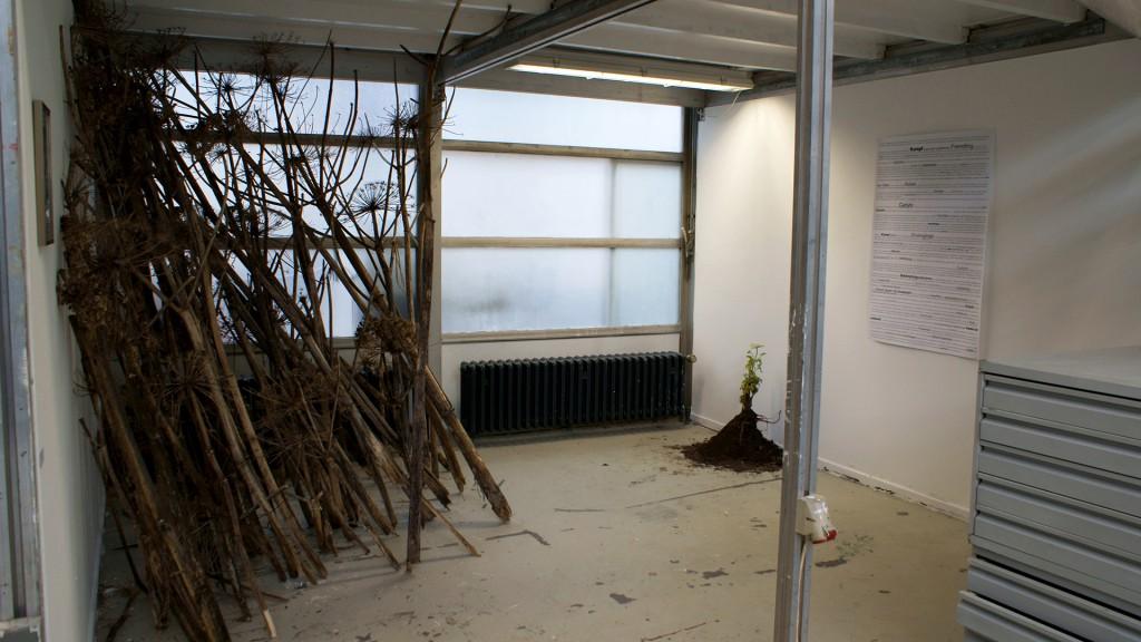 Katrin Pesch, Herkulesstaude, Ausstellungsansicht, 2012, 01