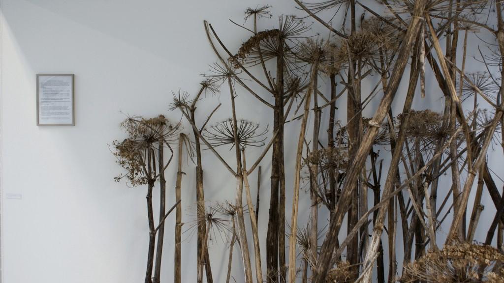 Katrin Pesch, Herkulesstaude, Ausstellungsansicht, 2012, 02