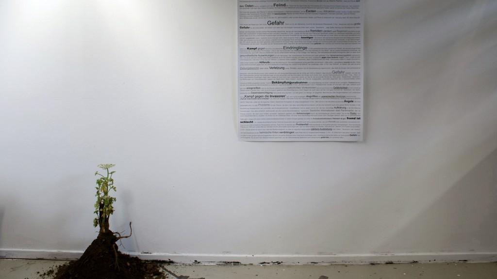 Katrin Pesch, Herkulesstaude, Ausstellungsansicht, 2012, 03