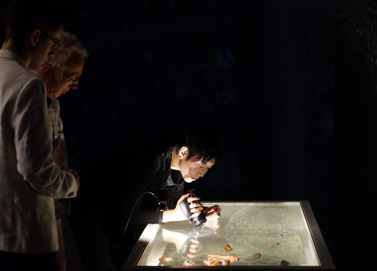 Snail-cannibalism, Fridericianum, Kasseler Museumsnacht 2016